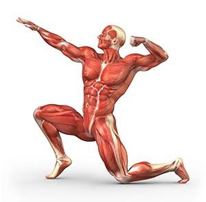 snel-spieren