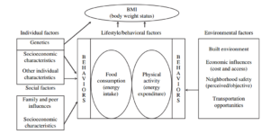 obesitas-factoren